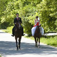 Аренда лошадей для фотосъёмки