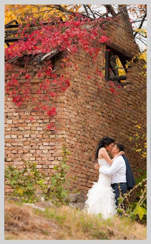 Фото 2199062 в коллекции Мои фотографии - TVC - свадебное видео