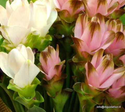 Фото 7309962 в коллекции Стиль, выбранный цвет свадьбы - Italia Viaggi - организация свадеб