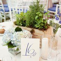 Горшечные растения в оформлении свадьбы