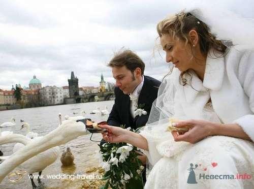 Фото 18084 в коллекции Свадьбы в Чехии - Невеста01