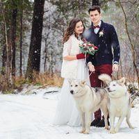 Зимняя свадьба с собаками