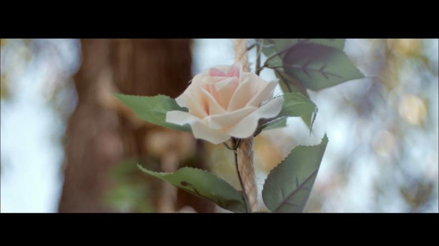 Дима и Алиса | Wedding highlights - фото 3261835 ArtVi Видеосъемка
