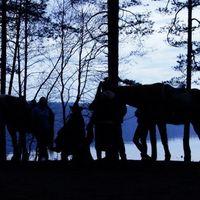 """Вечер на озере в конном клубе """"Парадиз"""" под Выборгом"""