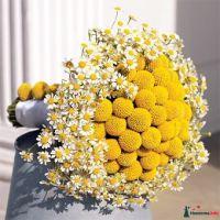 Букет невесты из желтых краспедий и белых ромашек