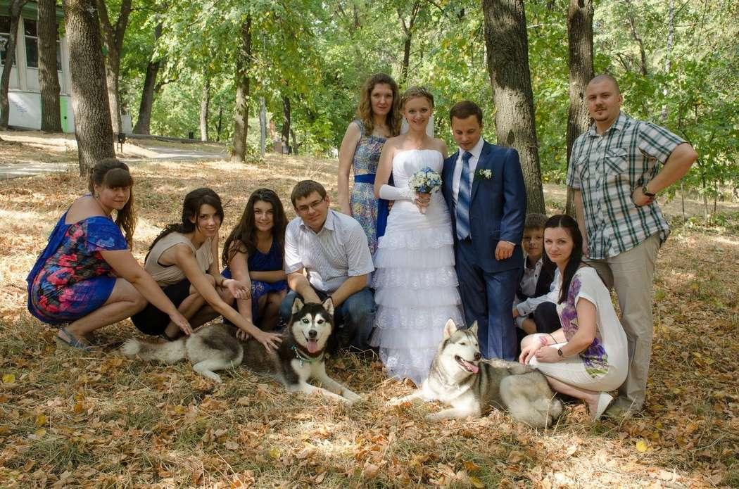 Фото 5474675 в коллекции Фото сессия с собаками - Праздничное агенство Event Art