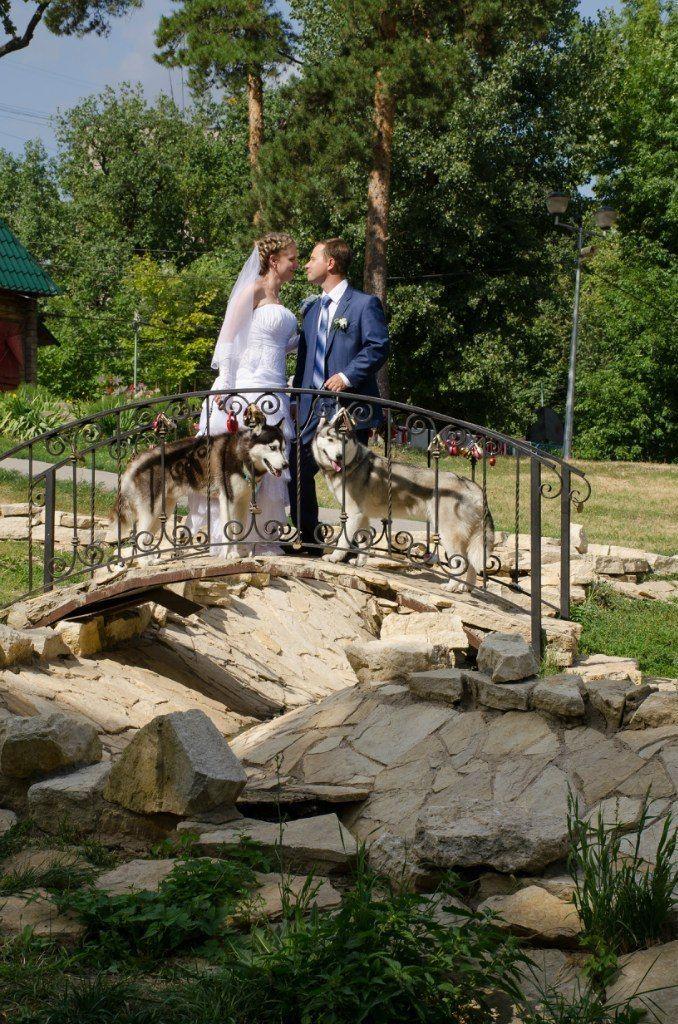 Фото 5474685 в коллекции Фото сессия с собаками - Праздничное агенство Event Art