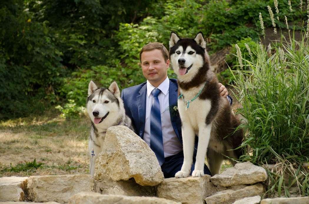 Фото 5474689 в коллекции Фото сессия с собаками - Праздничное агенство Event Art