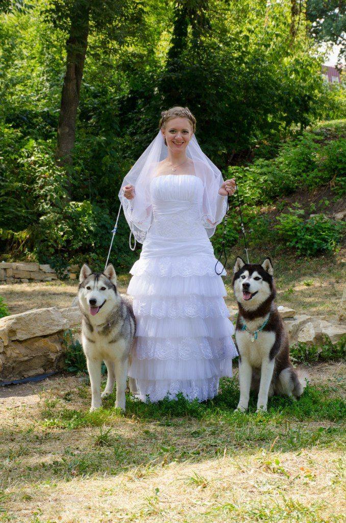 Фото 5474693 в коллекции Фото сессия с собаками - Праздничное агенство Event Art