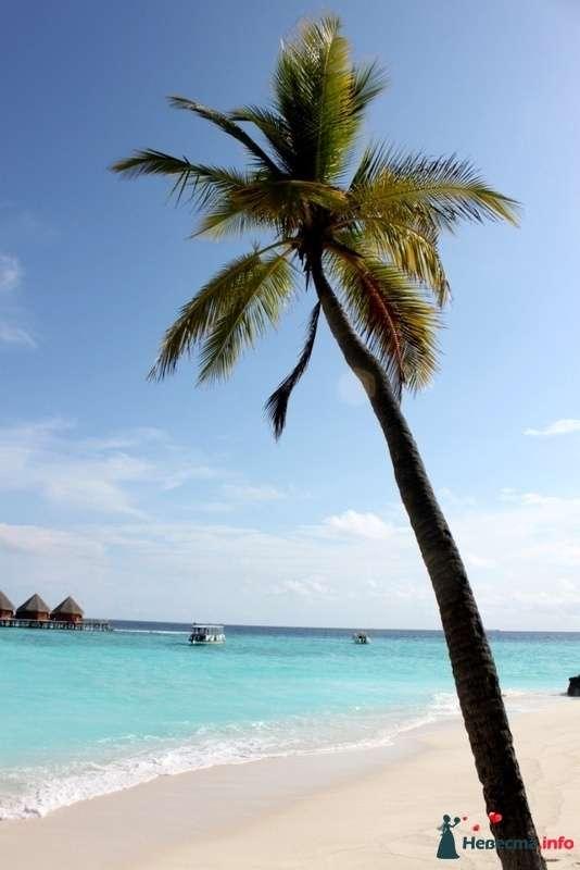 Фото 104338 в коллекции Мальдивы  -  идеальное место для медового месяца. - barbie
