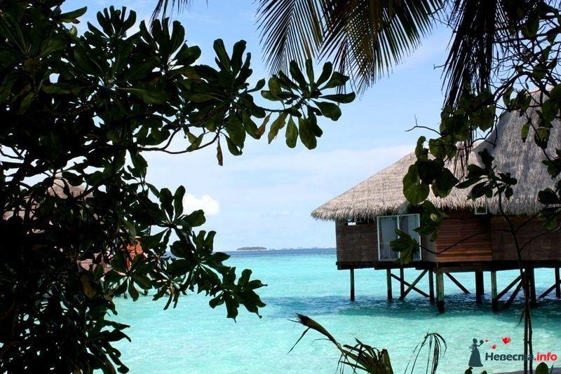 Фото 104367 в коллекции Мальдивы  -  идеальное место для медового месяца. - barbie