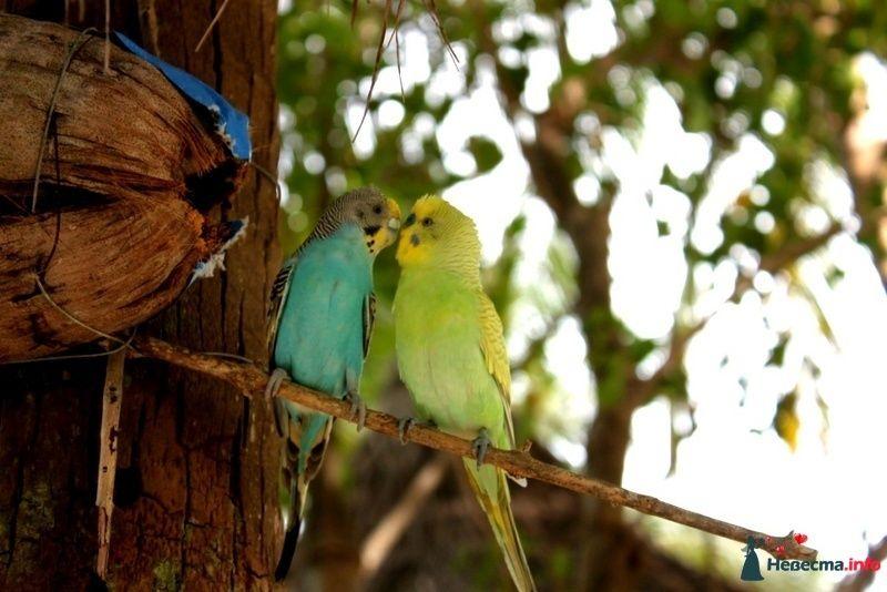 Фото 104721 в коллекции Мальдивы  -  идеальное место для медового месяца. - barbie