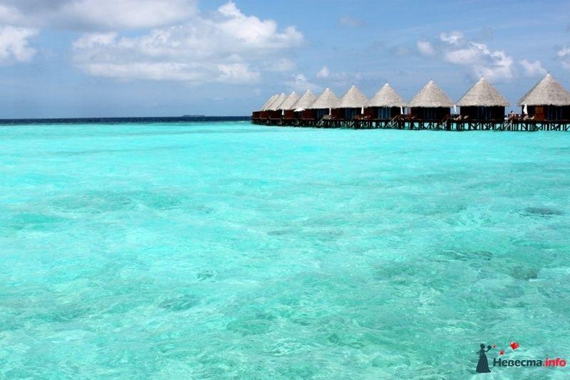 Фото 104731 в коллекции Мальдивы  -  идеальное место для медового месяца. - barbie