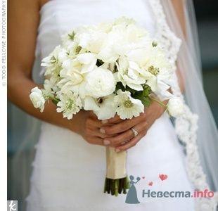 Фото 54895 в коллекции Разное - Невеста01