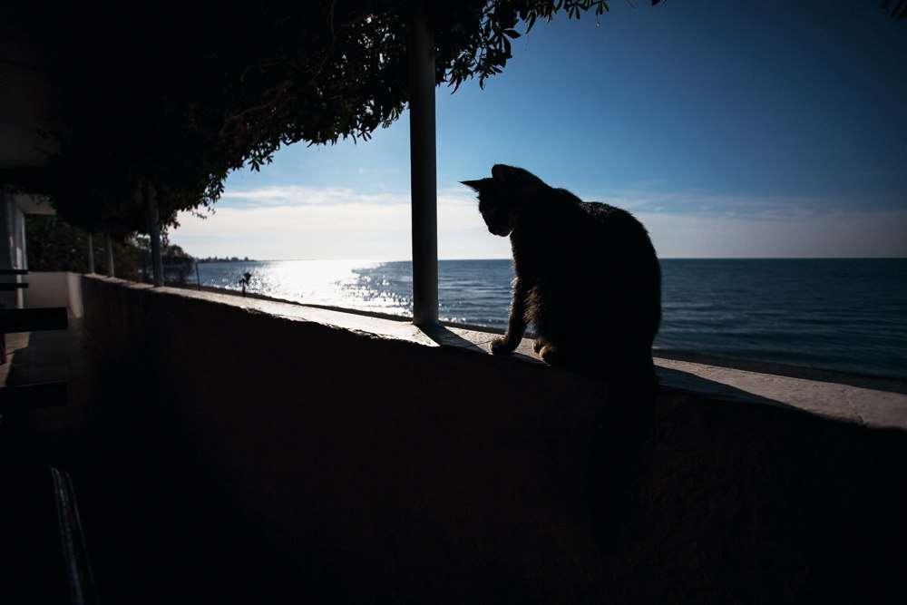 Фото 12797982 в коллекции Прогулки по Абхазии. Гагра - Фотограф Дмитрий Макарченко