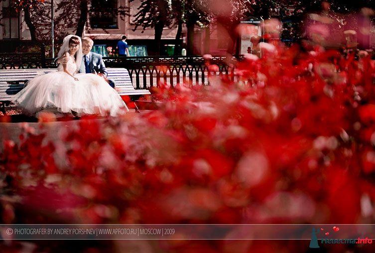 свадебный фотограф андрей поршнев - фото 87259 Фотограф Андрей Поршнев