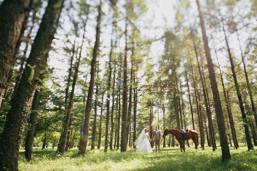 Фото 6082381 в коллекции Свадьбы - Фотограф Александр Лемар
