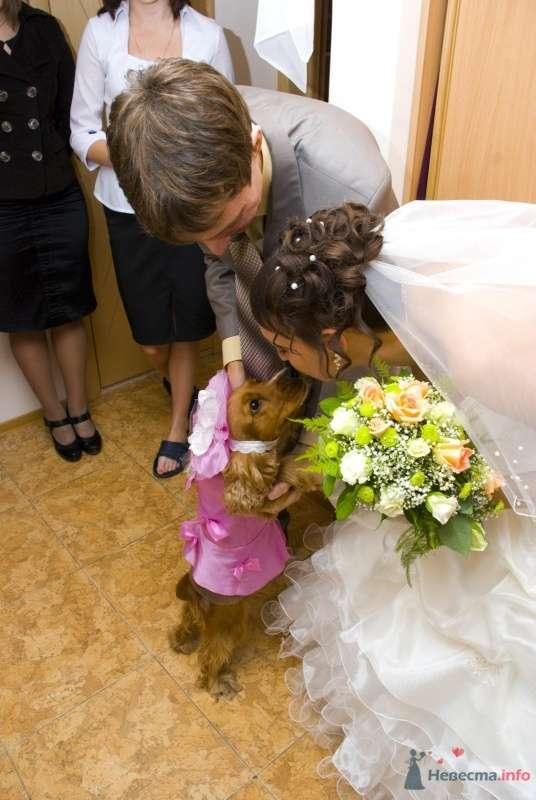 мама сшила нашей собачке костюм - платье и шляпку - фото 39297 Krolia