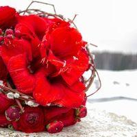 Красный зимний букет с аммарилисами и вербой