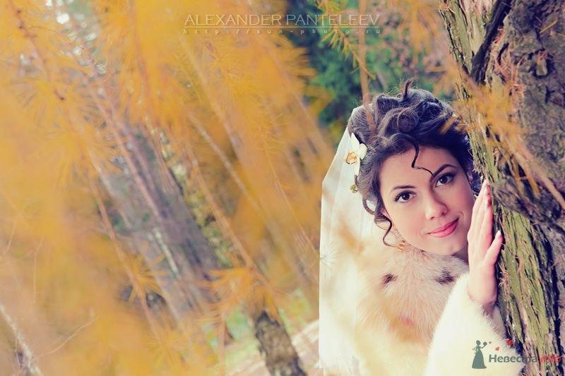 -*- - фото 49580 Свадебный фотограф Пантелеев Александр