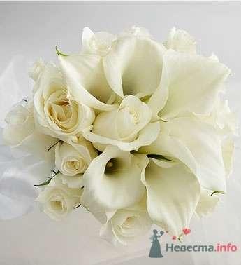 каллы и розы - фото 27674 Багирочка  Мэри