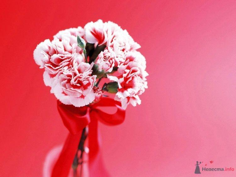 Букет невесты из розовых гвоздик, декорированный красной атласной