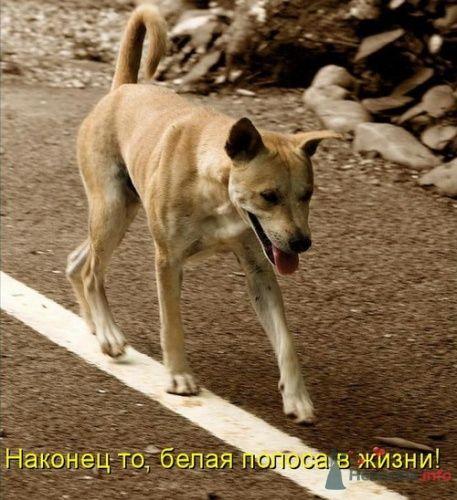 Фото 9355 в коллекции Свадебная суета - leshechka