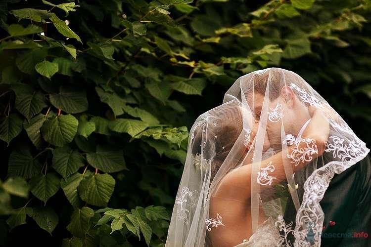 Фото 36229 в коллекции Портфолио - Свадебный фотограф Евгений Земцов