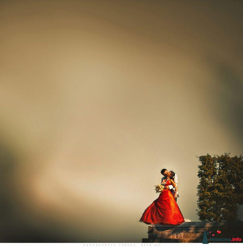 Свадебный фотограф / Сергей Запорожец - фото 82580 Фотограф Запорожец Сергей