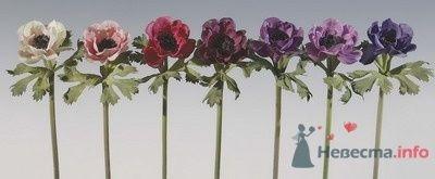 Фото 64671 в коллекции Свадебные штуки) - Julia Kay