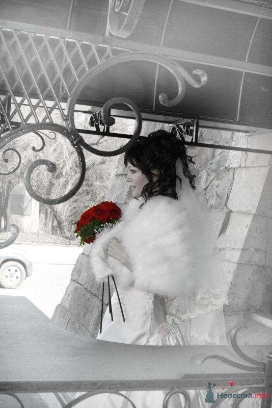 алые розы.. - фото 58796 Филиппова Марина
