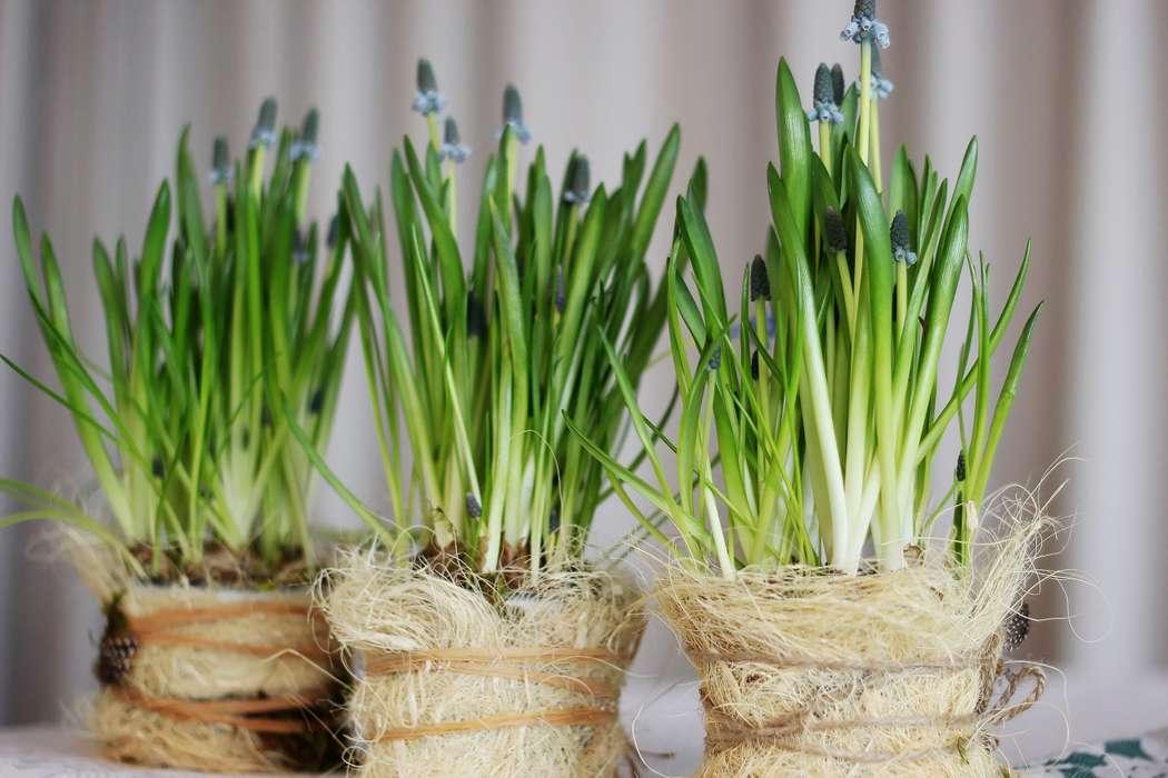 Фото 8986230 в коллекции Весна! - Декор и флористика от Елены Городиловой