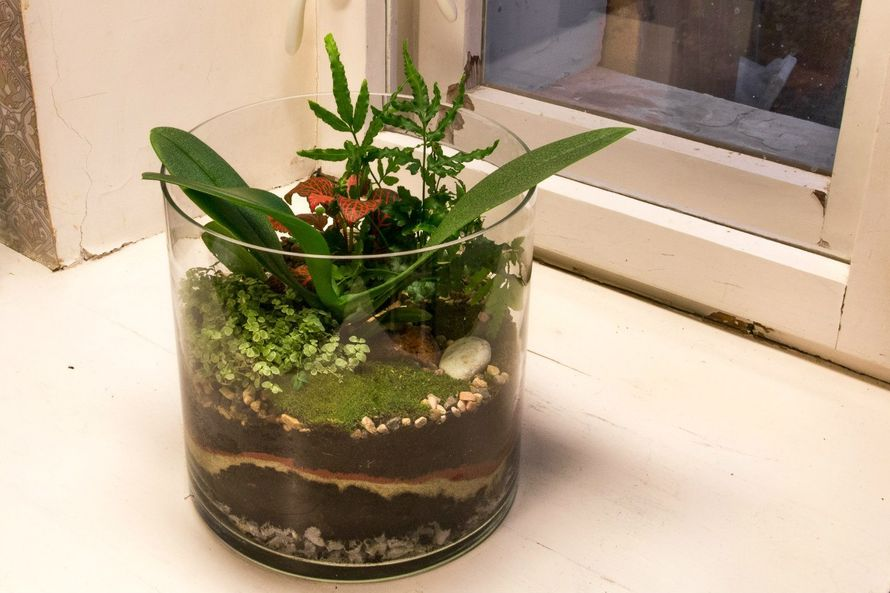 """Флорариум-цилиндр """"Тропический лес"""" с орхидеей и влаголюбивыми растениями (h=20cm, d=20cm)   #6 - фото 9450228 Мастерская флорариумов Юлии Шумилкиной"""