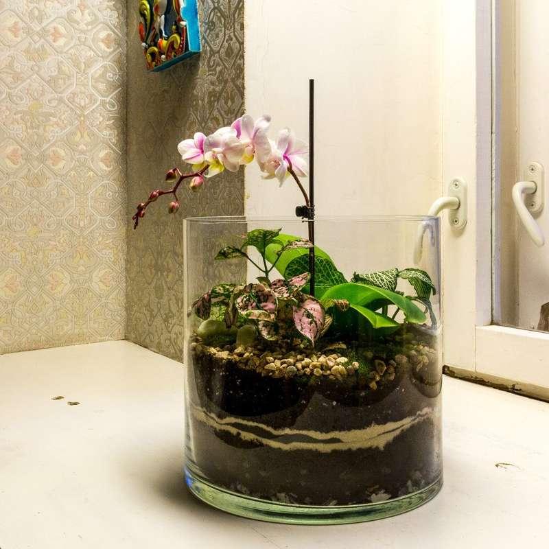 """Флорариум-цилиндр """"Тропический лес"""" с орхидеей и влаголюбивыми растениями (h=20cm, d=20cm)   #5 - фото 9450230 Мастерская флорариумов Юлии Шумилкиной"""