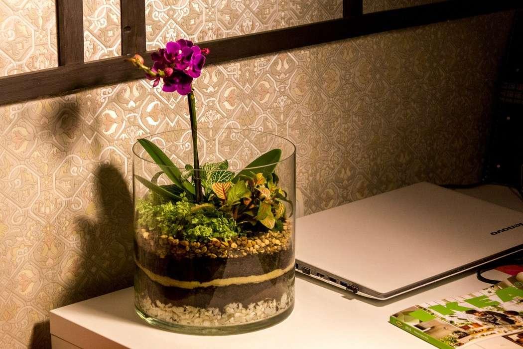 """Флорариум-цилиндр """"Тропический лес"""" с орхидеей и влаголюбивыми растениями (h=20cm, d=20cm)   #3 - фото 9450232 Мастерская флорариумов Юлии Шумилкиной"""