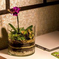 Флорариум «Тропический лес», цилиндр 20 см
