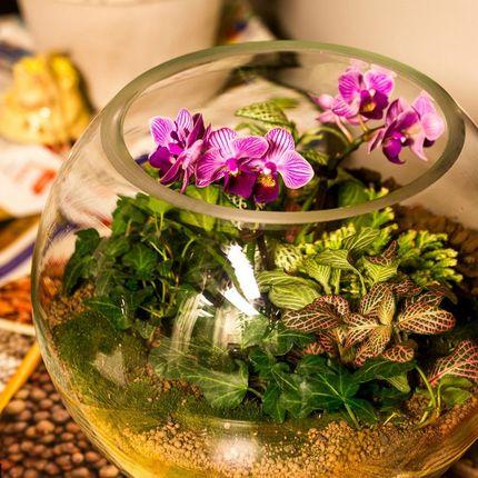Флорариум «Тропический лес» с орхидеями, шар 25 см