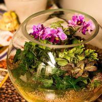 Шар 25 см «Тропический лес» с мини-орхидеями (ваза 7,5 л, ⌀25 см)   #12