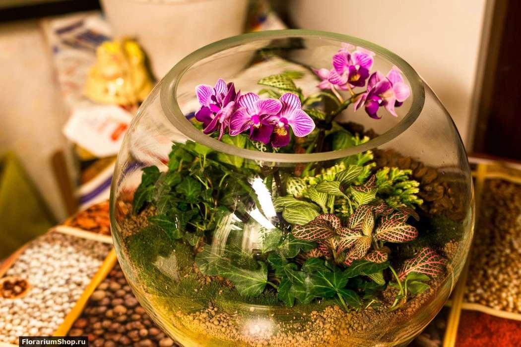 Шар 25 см «Тропический лес» с мини-орхидеями (ваза 7,5 л, ⌀25 см)   #12 - фото 9450264 Мастерская флорариумов Юлии Шумилкиной