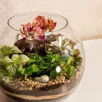 Флорариум-шар «Тропический лес» с мини-орхидеей и влаголюбивыми растениями (8 л, d=25 сm)   #4