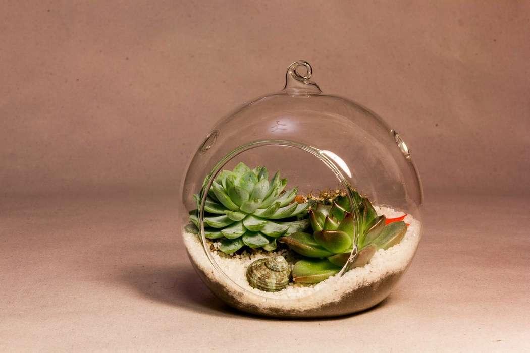 Подвесной шар 12 см с суккулентами #25   - фото 9450280 Мастерская флорариумов Юлии Шумилкиной