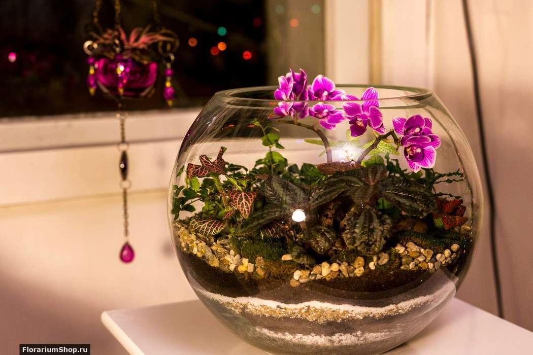 Шар 25 см «Тропический лес» с мини-орхидеями (ваза 7,5 л, ⌀25 см)   #16 - фото 9450286 Мастерская флорариумов Юлии Шумилкиной