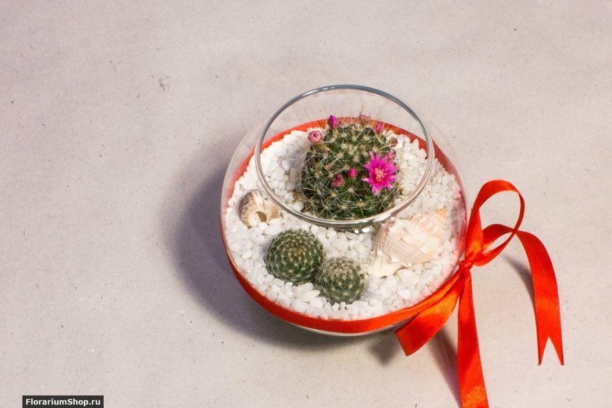 Мини-флорариум Шар 11 см «Море» с суккулентами.   #24 - фото 9450294 Мастерская флорариумов Юлии Шумилкиной