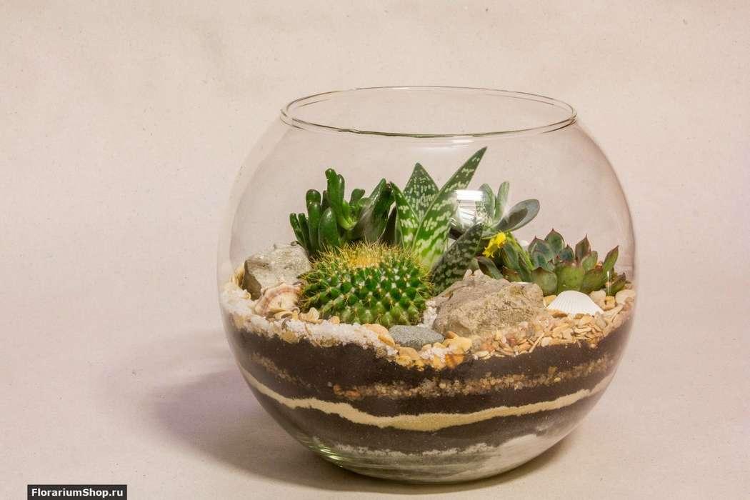 Флорариум Шар 22 см «Море»   #21 - фото 9450304 Мастерская флорариумов Юлии Шумилкиной