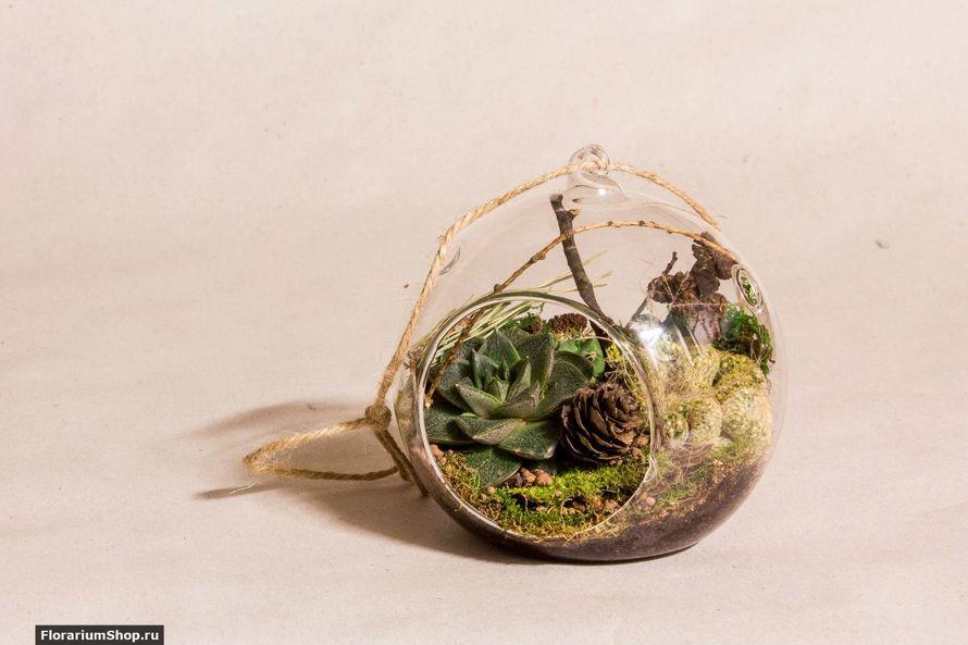 Подвесной шар 12 см «Лес» с суккулентами   #34 - фото 9876080 Мастерская флорариумов Юлии Шумилкиной