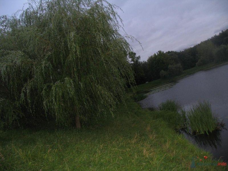 ивы - пушистые - фото 36303 Нюшка Менделеева