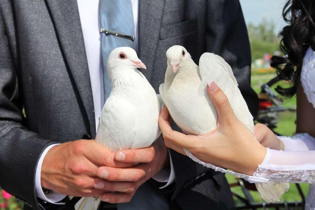 свадебные фото кольца голубей вооруженные силы гта