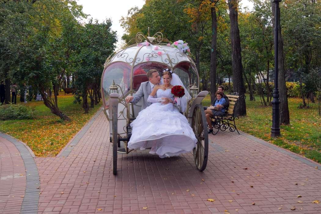 Фото 11046760 в коллекции Фото,Видео.. - Фото, Видеосъёмка Сергей Романов