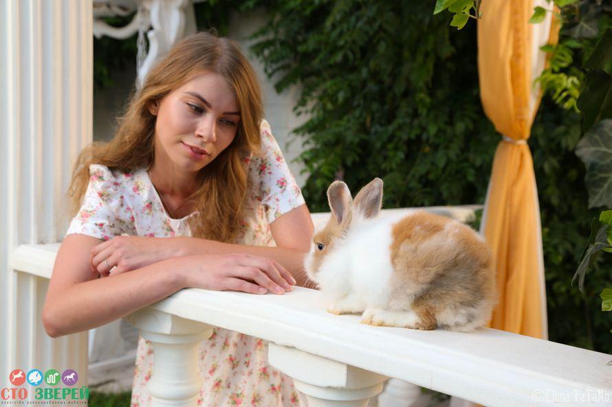 """Нестандартные свадебные фотосессии с животными!!!! - фото 11973986 """"Сто зверей"""" - агентство дрессированных животных"""