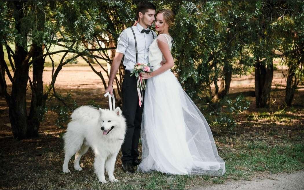 """Нестандартные свадебные фотосессии с животными!!!! - фото 11973996 """"Сто зверей"""" - агентство дрессированных животных"""